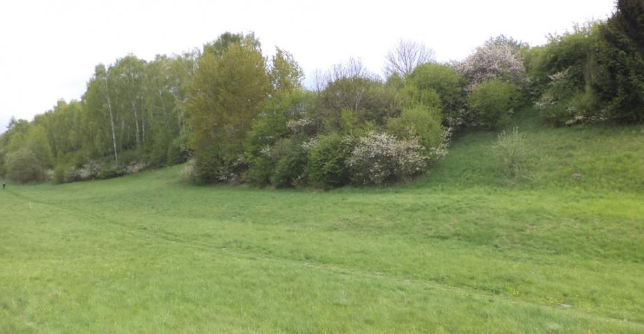 Bělá pod Bezdězem - zemědělské pozemky