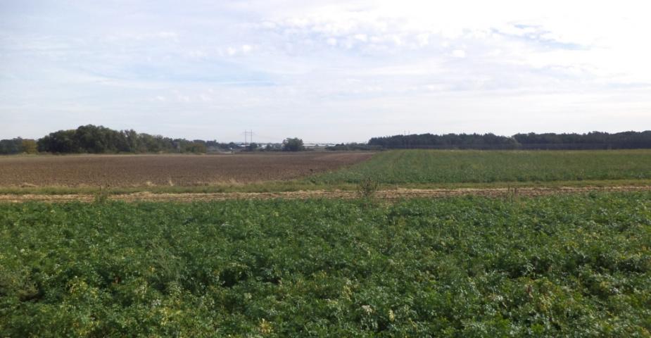 Chodouny - zemědělské pozemky